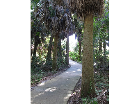The shady tropical path.
