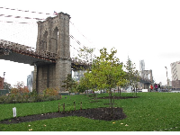 The Brooklyn Bridge towering way above a grassy slope.