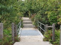 Nature path in Brooklyn Bridge Park.