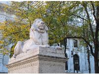 Lion sculpture in front of the New York Public Library.