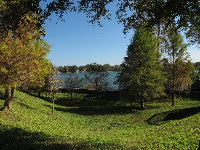 Lake, cute pine trees, and recessed grassy spot on Rollins College campus.