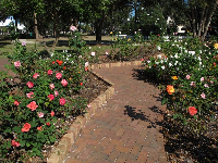 Brick pathway through the rose garden.