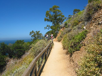 The trail at Julia Pfeiffer Burns State Park.