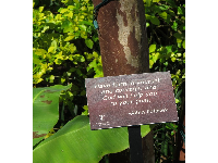 Quote by Polasek on a plaque in the garden.