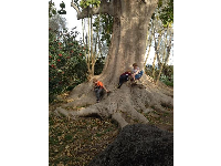 Children play on a magical tree at the zoo.