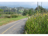 Flowers along the path by the lagoon, with Montecito's hills and the Santa Ynez mountains in the distance.