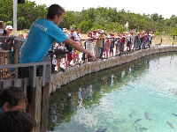 A young volunteer describes the game fish and sharks in the large pool outside.