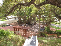 The cement stairs that lead to the base of the lighthouse, and the banyan tree below.
