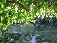 Light shining through the leaves, looking down at the Japanese garden.