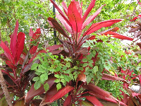 Red and green foliage.