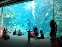 Children enjoy watching the scuba divers swim with sharks!