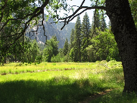 Meadow between Lower Yosemite trailhead and the visitor center parking lot.