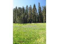 Meadow in Yosemite National Park.