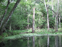 Lush vegetation surrounds the blue hole.