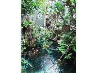Vines and sapphire water in the rainforest exhibit.
