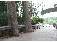 The amazing walkway into the park, with cypress trees left in place.