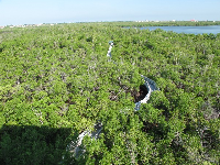 The boardwalk through the mangrove forest looks so cool from above!