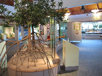 Inside the nature center.