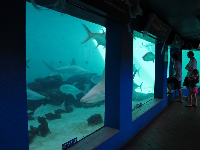 The shark exhibit.