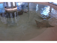 Sting ray touch tank!
