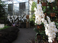 Orchids inside the conservatory.