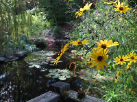 Flowers and lily pond in the children's garden.