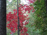 Red autumn leaves near the visitor center.