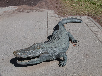 Alligator sculpture outside the museum.