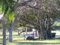 A school gathering under a fig tree in the park next to the beach.