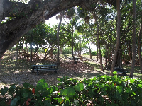 Picnic tables in the shade near the southern parking lot.