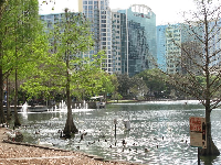 There are so many birds at Lake Eola Park!