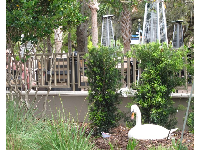 A swan nest in front of World of Beer.