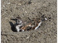 Cute bird relaxing in the sand.
