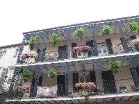 Balcony with hanging plants and flowerpots in the French Quarter.