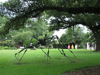 Spider, by Louise Bourgeois.