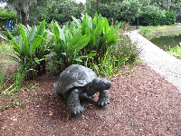 Tortoise, by Paul Manship.