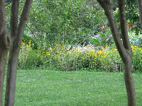 Looking between trees at an abundance of flowers.