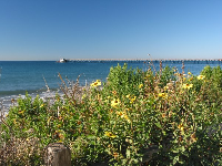 Black-Eyed Susans and the pier in the distance, on a blissful winter's day.
