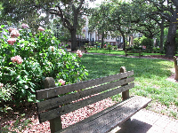 Bench and flowers in Monterey Square.
