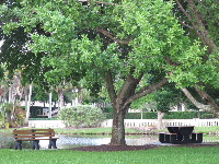Picnic table and bench in the beach park by a pond.