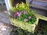 Flower box at the children's cottage.