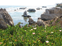 Flowers on the cliff, and rocks jutting out of the water.