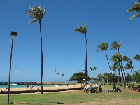 Coconut trees and picnic tables.