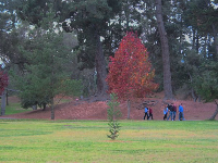 A family goes for a walk amongst gorgeous trees at Waller Park.