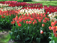 Tulips are so lovely!