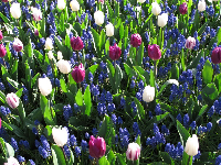 A bright mix of flowers, purple, blue, and white.