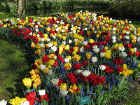 An attractive mix of yellow, blue, red, and white flowers.