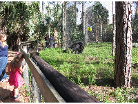 Visitors check out the bear enclosure.