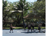 A basketball game among the palms.