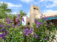 Flowers and tower at El Pedregal Marketplace.